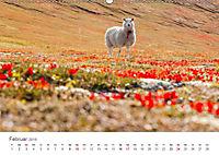 Schafe - Weich und wollig (Wandkalender 2019 DIN A2 quer) - Produktdetailbild 2