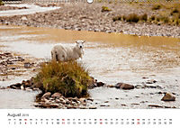 Schafe - Weich und wollig (Wandkalender 2019 DIN A2 quer) - Produktdetailbild 8