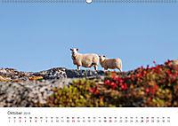 Schafe - Weich und wollig (Wandkalender 2019 DIN A2 quer) - Produktdetailbild 10