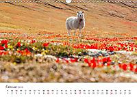 Schafe - Weich und wollig (Wandkalender 2019 DIN A3 quer) - Produktdetailbild 2