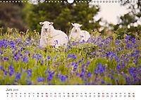 Schafe - Weich und wollig (Wandkalender 2019 DIN A3 quer) - Produktdetailbild 6