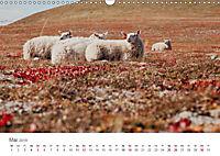 Schafe - Weich und wollig (Wandkalender 2019 DIN A3 quer) - Produktdetailbild 5