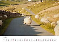 Schafe - Weich und wollig (Wandkalender 2019 DIN A3 quer) - Produktdetailbild 7