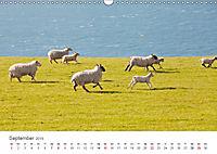 Schafe - Weich und wollig (Wandkalender 2019 DIN A3 quer) - Produktdetailbild 9