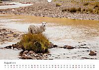 Schafe - Weich und wollig (Wandkalender 2019 DIN A3 quer) - Produktdetailbild 8