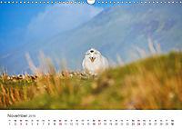Schafe - Weich und wollig (Wandkalender 2019 DIN A3 quer) - Produktdetailbild 11