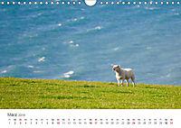 Schafe - Weich und wollig (Wandkalender 2019 DIN A4 quer) - Produktdetailbild 3