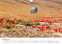 Schafe - Weich und wollig (Wandkalender 2019 DIN A4 quer) - Produktdetailbild 2