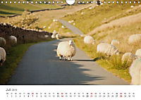 Schafe - Weich und wollig (Wandkalender 2019 DIN A4 quer) - Produktdetailbild 7