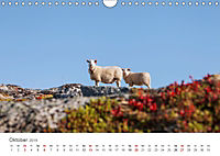 Schafe - Weich und wollig (Wandkalender 2019 DIN A4 quer) - Produktdetailbild 10