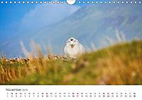 Schafe - Weich und wollig (Wandkalender 2019 DIN A4 quer) - Produktdetailbild 11