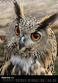 Scharfe Krallen, scharfe Augen, Greifvögel und Eulen im Wildpark (Tischkalender 2019 DIN A5 hoch) - Produktdetailbild 12