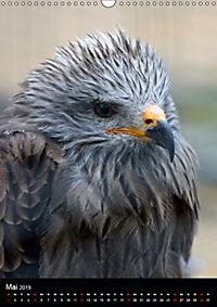 Scharfe Krallen, scharfe Augen, Greifvögel und Eulen im Wildpark (Wandkalender 2019 DIN A3 hoch) - Produktdetailbild 5