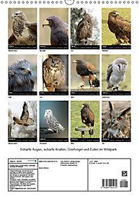 Scharfe Krallen, scharfe Augen, Greifvögel und Eulen im Wildpark (Wandkalender 2019 DIN A3 hoch) - Produktdetailbild 13