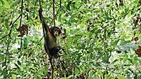 Schimpansen - Produktdetailbild 1