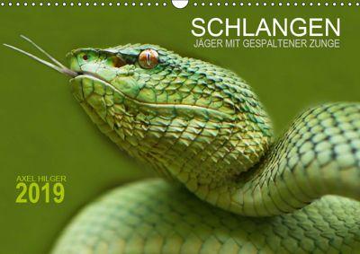 SCHLANGEN. JÄGER MIT GESPALTENER ZUNGE (Wandkalender 2019 DIN A3 quer), Axel Hilger