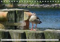 Schleswig-Holstein Moin Moin (Tischkalender 2019 DIN A5 quer) - Produktdetailbild 1
