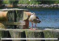 Schleswig-Holstein Moin Moin (Wandkalender 2019 DIN A2 quer) - Produktdetailbild 1
