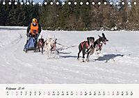 Schlittenhundesport (Tischkalender 2019 DIN A5 quer) - Produktdetailbild 2