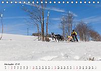 Schlittenhundesport (Tischkalender 2019 DIN A5 quer) - Produktdetailbild 11