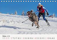 Schlittenhundesport (Tischkalender 2019 DIN A5 quer) - Produktdetailbild 10