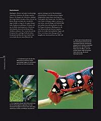 Schmetterlinge - Produktdetailbild 2