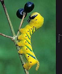Schmetterlinge - Produktdetailbild 3