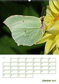 Schmetterlinge in deutschen Gärten (Wandkalender 2019 DIN A2 hoch) - Produktdetailbild 1