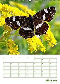 Schmetterlinge in deutschen Gärten (Wandkalender 2019 DIN A2 hoch) - Produktdetailbild 3