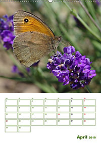 Schmetterlinge in deutschen Gärten (Wandkalender 2019 DIN A2 hoch) - Produktdetailbild 4