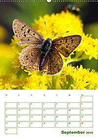 Schmetterlinge in deutschen Gärten (Wandkalender 2019 DIN A2 hoch) - Produktdetailbild 9