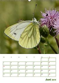 Schmetterlinge in deutschen Gärten (Wandkalender 2019 DIN A2 hoch) - Produktdetailbild 6