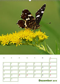 Schmetterlinge in deutschen Gärten (Wandkalender 2019 DIN A2 hoch) - Produktdetailbild 12