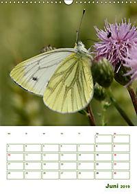 Schmetterlinge in deutschen Gärten (Wandkalender 2019 DIN A3 hoch) - Produktdetailbild 6