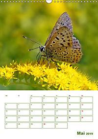 Schmetterlinge in deutschen Gärten (Wandkalender 2019 DIN A3 hoch) - Produktdetailbild 5