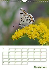 Schmetterlinge in deutschen Gärten (Wandkalender 2019 DIN A4 hoch) - Produktdetailbild 10