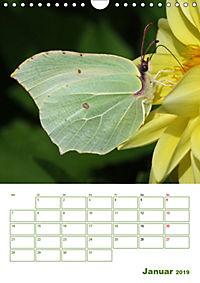 Schmetterlinge in deutschen Gärten (Wandkalender 2019 DIN A4 hoch) - Produktdetailbild 1