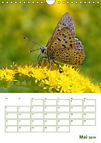 Schmetterlinge in deutschen Gärten (Wandkalender 2019 DIN A4 hoch) - Produktdetailbild 5