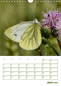 Schmetterlinge in deutschen Gärten (Wandkalender 2019 DIN A4 hoch) - Produktdetailbild 6