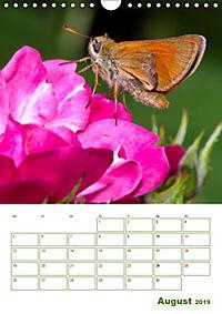 Schmetterlinge in deutschen Gärten (Wandkalender 2019 DIN A4 hoch) - Produktdetailbild 8