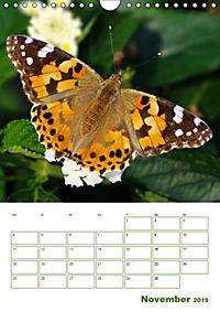 Schmetterlinge in deutschen Gärten (Wandkalender 2019 DIN A4 hoch) - Produktdetailbild 11