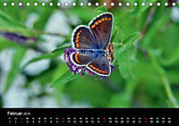 Schmetterlinge in Deutschland (Tischkalender 2019 DIN A5 quer) - Produktdetailbild 2