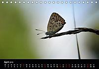Schmetterlinge in Deutschland (Tischkalender 2019 DIN A5 quer) - Produktdetailbild 4