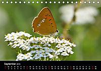Schmetterlinge in Deutschland (Tischkalender 2019 DIN A5 quer) - Produktdetailbild 9