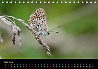 Schmetterlinge in Deutschland (Tischkalender 2019 DIN A5 quer) - Produktdetailbild 6