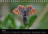 Schmetterlinge in Deutschland (Tischkalender 2019 DIN A5 quer) - Produktdetailbild 7