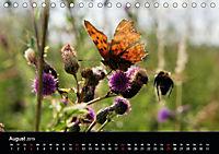Schmetterlinge in Deutschland (Tischkalender 2019 DIN A5 quer) - Produktdetailbild 8