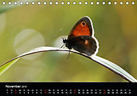 Schmetterlinge in Deutschland (Tischkalender 2019 DIN A5 quer) - Produktdetailbild 11