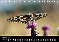 Schmetterlinge in Deutschland (Tischkalender 2019 DIN A5 quer) - Produktdetailbild 10