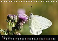Schmetterlinge in Deutschland (Tischkalender 2019 DIN A5 quer) - Produktdetailbild 12
